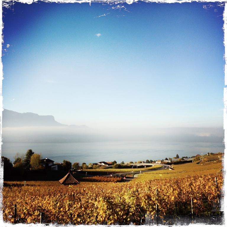 Vue sur la vigne entre Montreux et Lausanne. Le magnifique vignoble du Lavaux !